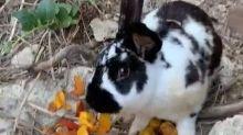"""Ischia, turisti prendono a sassate e uccidono un coniglio """"per noia"""""""