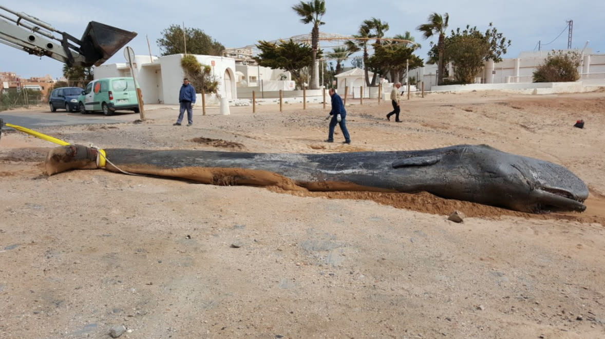 Sperm whale found dead from 'gastric shock' with 29 kilos of plastic rubbish in its stomach