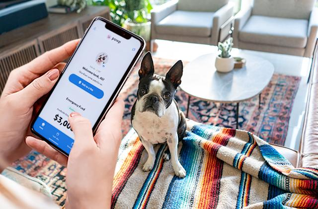 Talk to a vet online when your pet needs one with Pawp