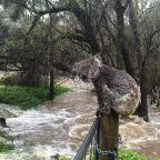 Raindouses some Australian bush fires but flash floods now threaten wildlife