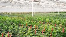 Shares of Aphria jump as cannabis company reports $16.4M Q1 profit