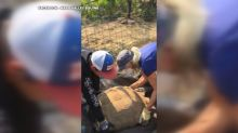 200-pound, 85-year-old tortoise gets a lift from California wildfires in a wheelbarrow