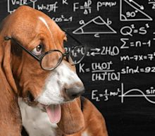 The New Formula to Calculate Your Dog's Age in Human Years