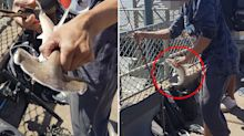 'What the hell?' Man's morbid act after catching tiny hammerhead shark