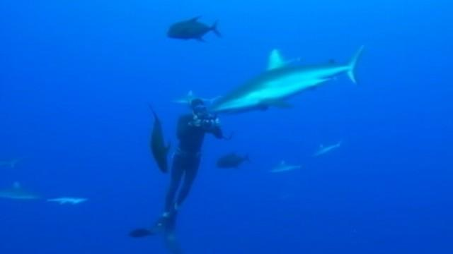 Free Diving Down to the Depths