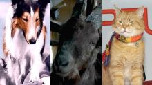 What happened to these famous movie animals?