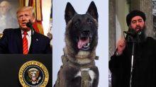 Trump shows off 'wonderful' dog used in al-Baghdadi raid