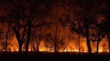 O que faz deste o pior período de queimadas das últimas décadas no Pantanal