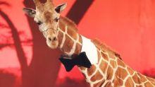 """La girafe de """"Very Bad Trip 3"""" saisie par les autorités en Californie"""