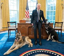 Biden's German shepherds have been sent home to Delaware after a 'biting incident' with White House security officers