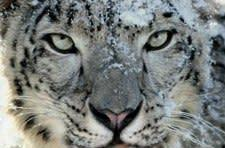 Bug tracker: Snow Leopard guest accounts eating files?