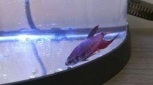 Mulher resgata peixe deformado e mostra sua incrível recuperação