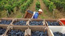 La production mondiale de vin en 2020 marquée par les calamités météo et le Covid