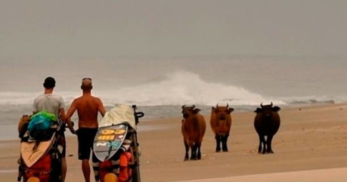 Surf - Lost in the swell : Une longue traversée du Gabon à vélo entre crocodiles et autres animaux