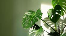 Voici la solution imparable pour arroser ses plantes d'intérieur pendant les vacances