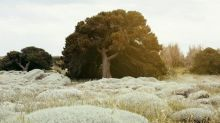 Tree of the week: 'This juniper reminded me that magic is everywhere'