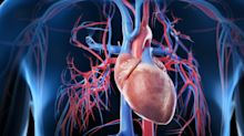 QUIZ: Which is the largest organ in the human body?