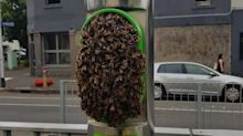 Commuters' shock at finding swarm of bees at tram stop