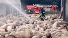 2500 Schweine sterben bei Brand einer Mastanlage