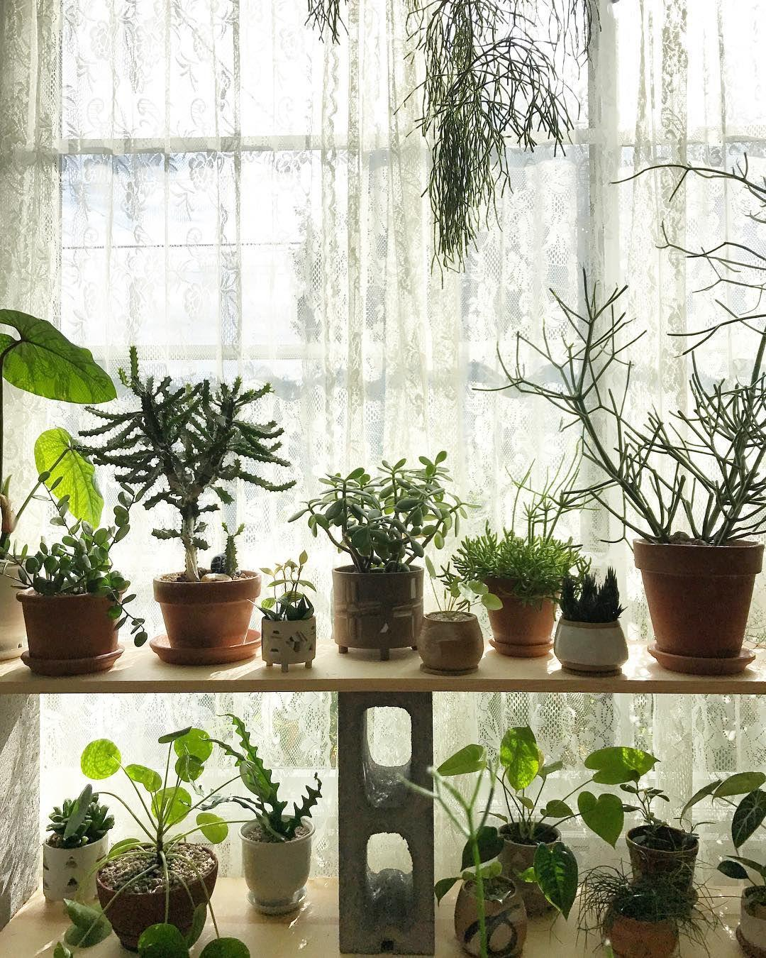 put these plants in your bedroom for the best sleep ever