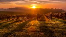 12 best world wines