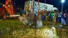 Helfer in Südindien retten Elefant aus Brunnenschacht