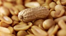 Scientists tout positive findings in peanut allergy pill study