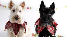 Mascotas con espíritu navideño