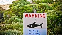 Speerfischer bei Hai-Attacke in Australien schwer verletzt