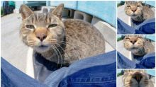 【連環圖】日本流浪貓超嘆 聞攝影師鏡頭變大頭貓