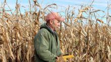 Plantio de milho desacelera no PR para reduzir risco climático; soja aguarda chuva