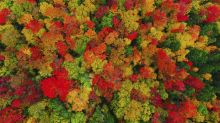 Aerial images capture beautiful autumn landscape