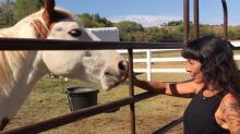 How a 'violently abused' horse's recovery is helping grieving humans: 'Look at what love can do'