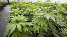 London-listed Kanabo signs Greek cannabis growing deal