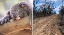 Desperate plan to save Australia's ever-growing list of threatened species