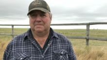 Animal cruelty officers to investigate whether 200 Sask. cattle died from neglect
