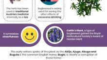 7 Science-backed Health Benefits And Side Effects Of Bugleweed