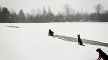 Mujer se arrojó a un lago helado… para salvar a un perro