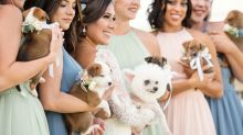 Couple ditches floral bouquets for rescue puppies in adorable wedding ceremony