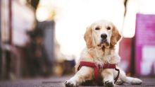 Wegen der Coronakrise wird ein Hund zum Helden