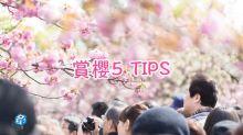賞櫻5 TIPS