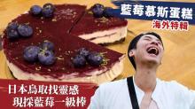 藍莓慕斯蛋糕 - 日本鳥取找靈感 現採藍莓一級棒