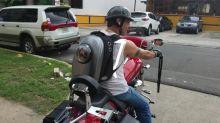Cat enjoys motorcycle ride in astronaut capsule backpack