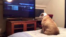 A reação desta cachorra assistindo à 'Invocação do Mal' é o que você precisa ver hoje