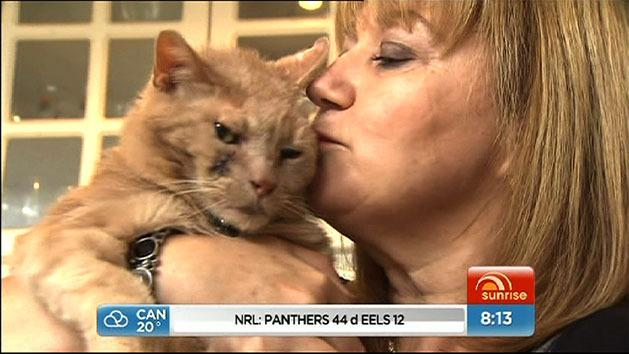 Cat 'detected woman's cancer'