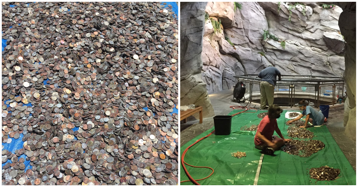 Aquarium collecting coins in waterfall to help pay for animal care
