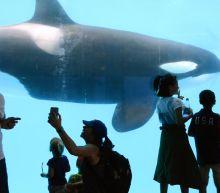 Breaking: SeaWorld halts Orlando construction work