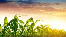 Soybeans Higher Break 7 Day Losing Streak