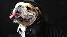 Arkansas Woman Sentenced for Buying Dog Tuxedo With County Cash
