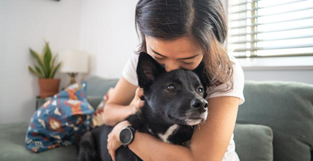 Pet insurance: Everything you need to know